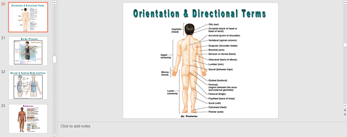Male and Female Human Body Outline for PowerPoint
